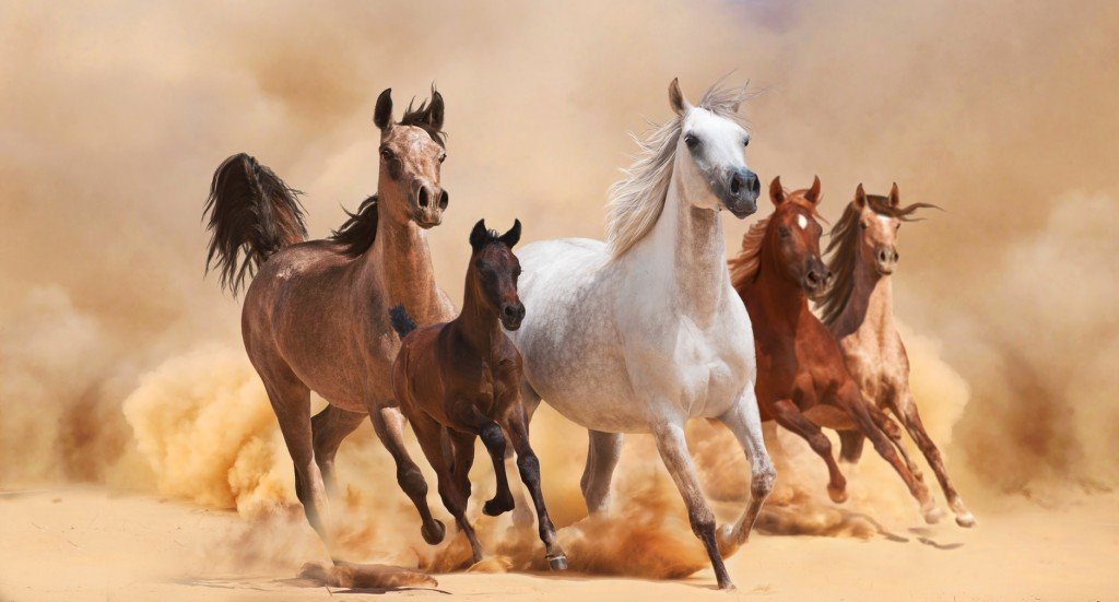 Don't Give Them Faster Horses ... Give Them Results!